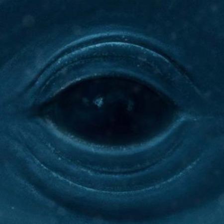 Whales in Oceans Frank Ocean – Blue Whale